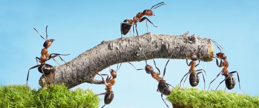 5 claves para una empresa más eficiente